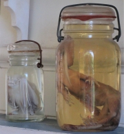 Museo Hemingway -Jars on a Shelf