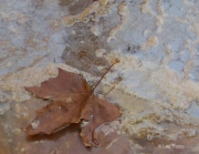 Foaming River with Brown Leaf
