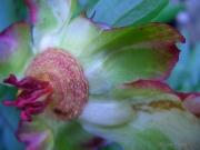 Center - Dead Flower #2
