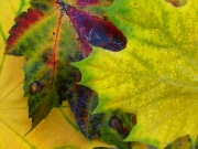 Global-Warming Leaves 3