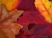 Global Warming Leaves 4