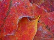 Global Warming Leaves 9A
